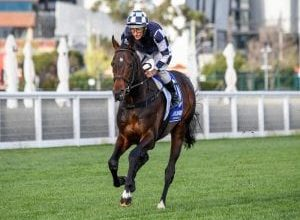 Photo of Russian Camelot On Music For Cox Plate Bid