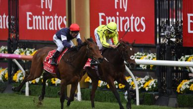 Photo of 2020 Melbourne Cup Betting Ideas and Tendencies