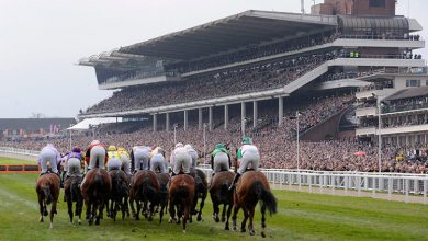 Photo of Cheltenham Horse Racing Trends & Tips: Sunday 15th Nov 2020