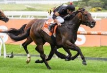 Photo of Payne has Defibrillate in peak order for Australian Cup