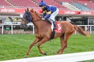 Photo of Mahamedeis to run for Ryan from new home