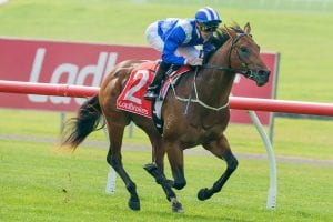 Photo of Hayes To Fork Out For Smart Colt