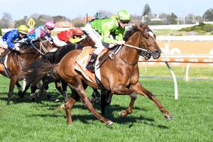 Photo of Golden Eagle A Chance For Winx Guineas Winner Our Playboy