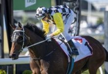 Photo of Anderson Aiming For Melbourne & Sydney With Ballistic Boy