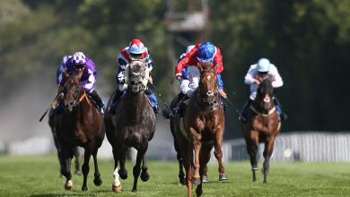 Photo of 2021 Sovereign Stakes Betting Trends and Free Tips
