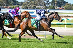 Photo of Young Werther set to come of age in Caulfield Cup